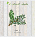 pure essential oil collection grand fir wooden vector image vector image