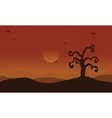 Scenery dry tree and bat at afternoon Halloween vector image vector image