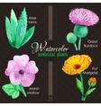 Set of watercolor madicinal plants vector image