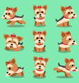 Cartoon character yorkshire terrier dog poses set vector image vector image