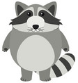 cute raccoon with round body vector image vector image
