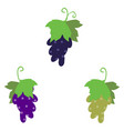 grape cluster isolated on white vector image
