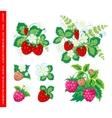 Natural organic berries set vector image