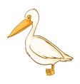 pelican bird on white background vector image vector image