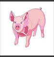 pig side view color vector image vector image