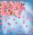 pink blossoming cherry and falling petals vector image