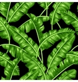 Seamless pattern with banana leaves Image of vector image vector image