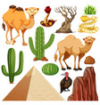 set cute desert animal and nature vector image vector image