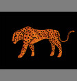 cheetah side view tiger graphic vector image vector image