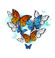 morpho and monarchs vector image vector image