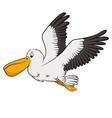 pelican cartoon drawing vector image vector image