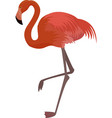 pink flamingo on a white background vector image