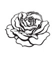 black and white rose flower fully open design vector image
