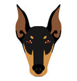 Doberman pinscher avatar