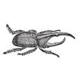 hercules beetle vintage vector image