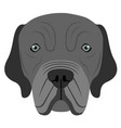 neapolitan mastiff avatar vector image vector image