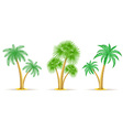 palm tree 17 vector image vector image
