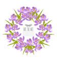 crocus floral wreath vector image