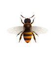 flying honey bee isolated icon vector image