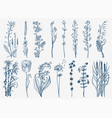 wild flowers with leaves set wedding botanical vector image vector image