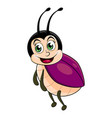 beetle lady insect isolated on white background vector image vector image