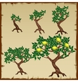 Five icons growth stages of lemon tree vector image vector image