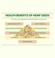 health benefits hemp seeds infographic vector image vector image