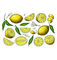 Lemon drawing summer fruit artistic