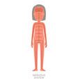 nervous system woman anatomy vector image vector image