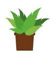 plant in vase vector image vector image