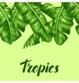 Seamless border with banana leaves Image of vector image vector image