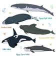 set whales from world killer whale pygmy vector image vector image