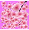 Spring Pink Flowers Isolated on Pink Background vector image