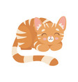 striped red cat sleeping cute kitten animal pet vector image vector image