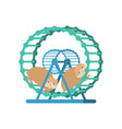 hamster in wheel isolated vector image