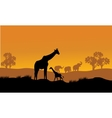 Wild african animals silhouettes vector image vector image