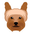 yorkshire terrier avatar vector image