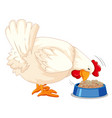 a chicken eating food vector image vector image