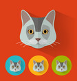 cat portrait with flat design vector image vector image
