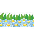 chamomile border vector image vector image
