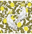 cockatoo and lemon vector image vector image