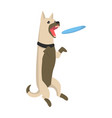 dog jumping and catching blue frisbee open mouth vector image