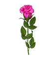 Rose isolated on a white background vector image vector image