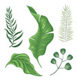 set different leaves on a white background vector image vector image