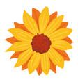 sunflower plant with orange petals autumn season vector image