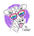 giraffe sticking out tongue funny poster vector image vector image