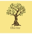 Logo of olive tree with berries on branches vector image vector image