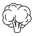 natural broccoli icon outline style vector image