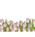 Pink tulips on white background EPS 10 vector image vector image