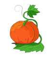 Ripe pumpkin with leaves vector image